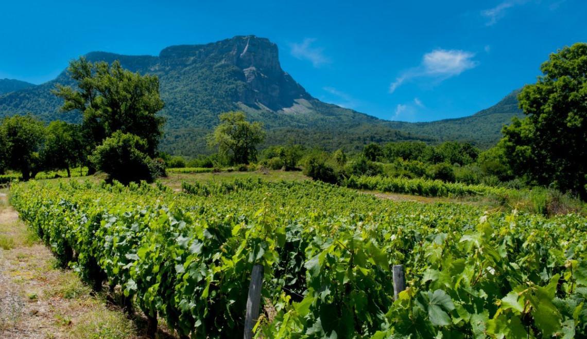 Domaine Giachino Vignes