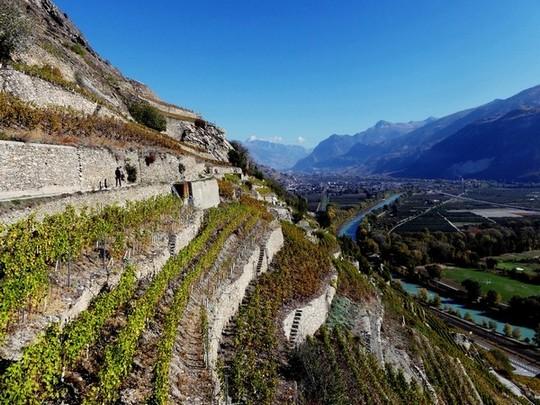 Vignes en terrasses du Canton du Valais, surplombant le Rhône